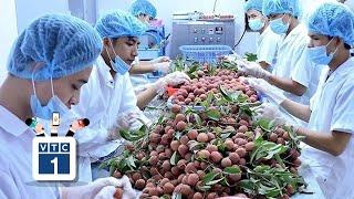 Loạt nông sản vào EU với thuế 0%: Có phải miếng bánh ngon?