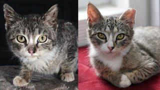 Street Cat Rescue: Lionel