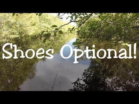 Barefoot Wading In A Cypress Swamp!