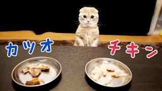食いしん坊猫はお肉と魚どっちが好き?