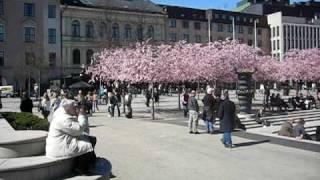 цветение сакуры в Стокгольме(, 2009-11-20T21:33:14.000Z)