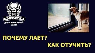 Собака лает в квартире!Как отучить собаку лаять в квартире  когда осталась сама?воет в квартире|