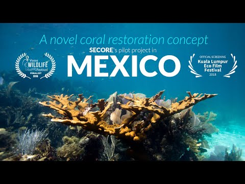 A novel coral restoration concept - SECORE's pilot project in Mexico (documentary)