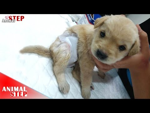 Little Puppy Has Life More than Hurt