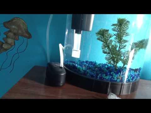 e88fe98470955d Betta fish vs sea monkeys - YouTube