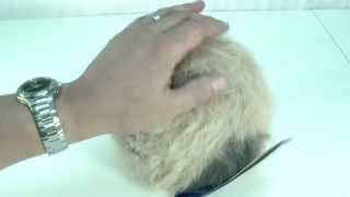 Star Trek Tribble Replica Diamond Select Toys Review By Movie Figures