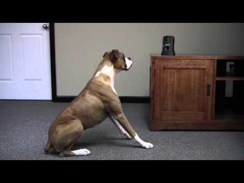 dog-silencer-pro