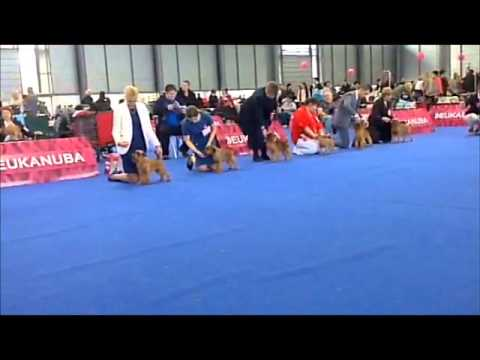 European Dog Show-2014, Brussels Griffon, Champion Dogs