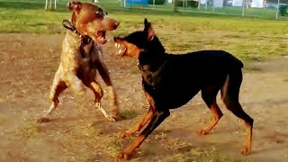 Owners Worried A Dogfight Would Start After Someone Dumped Toys At Dog Park