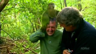 shagged by a rare parrot