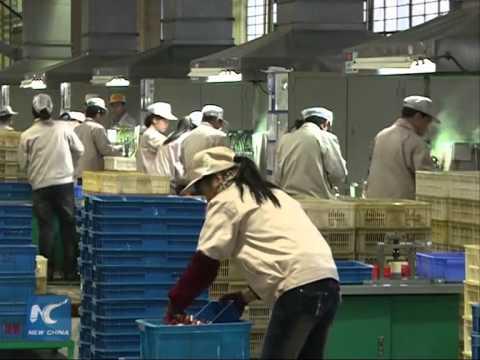 China's manufacturing PMI rebounds