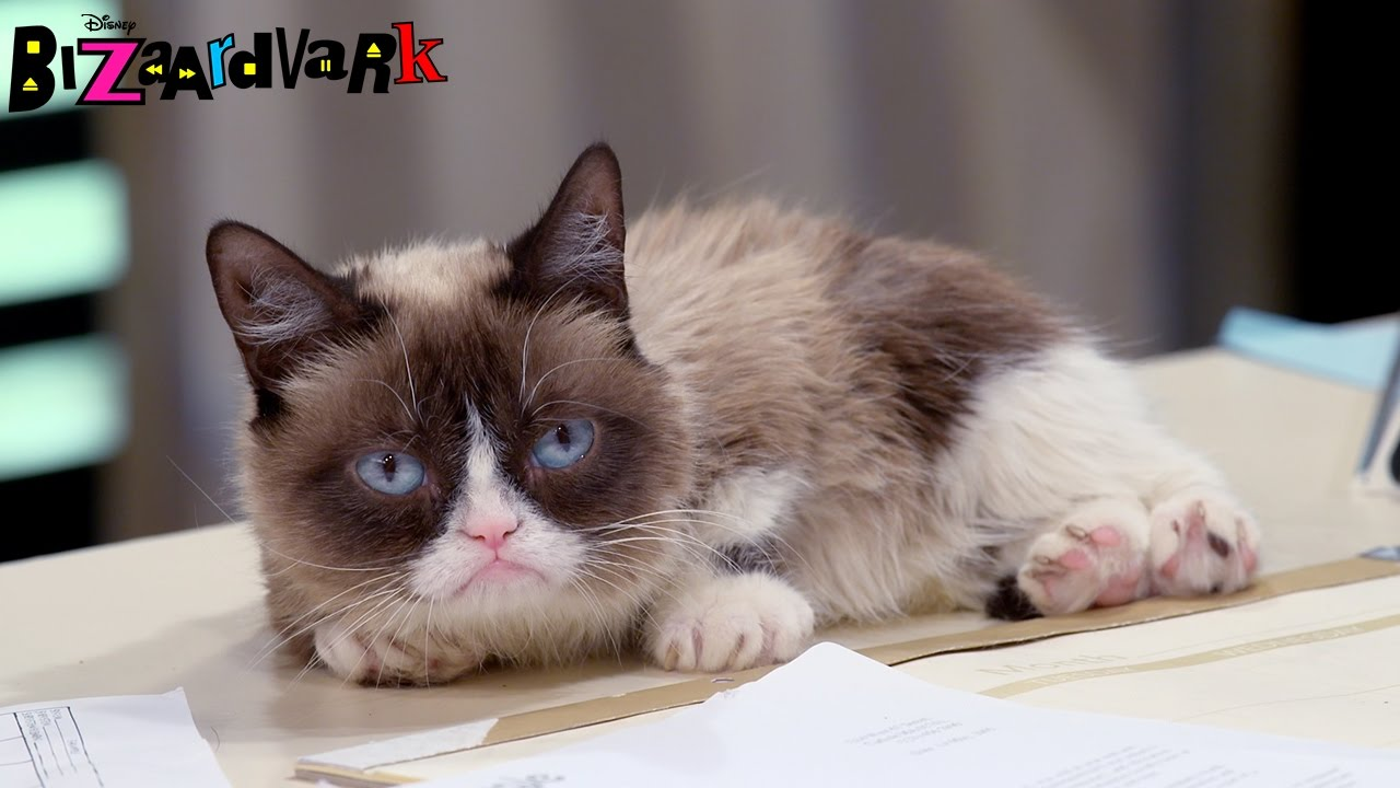 Image of: Movie Tumblr Grumpy Cat Pitch Bizaardvark Disney Channel Youtube