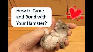 How to Tame and Bond with Your Hamster | ♥wukong_qq♥