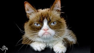 Grumpy Cat's Parents Sue Coffee Shop