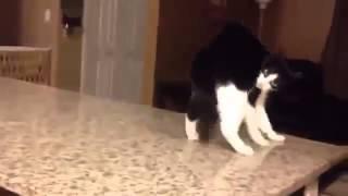 Кот уходит.