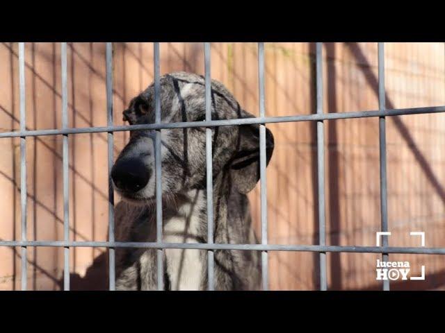 VÍDEO: Nuevo contrato de control de animales. El año pasado se recogieron unos 300 perros