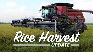 Soggy Rice Harvest
