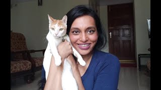 Flying With a Cat InCabin During COVID19 Within India | StepbyStep Process