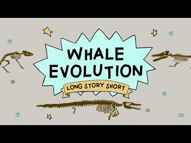 Whale Evolution: Good Evidence for Darwin? (Long Story Short, Ep. 2)
