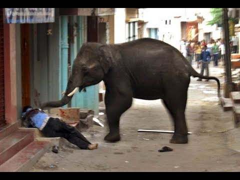 Rogue Elephant Kills Man During Mysore Rampage