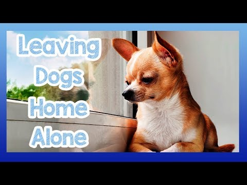 tips-on-how-to-keep-a-dog-home-alone!-training-your-dog-to-be-home-alone-without-a-problem!