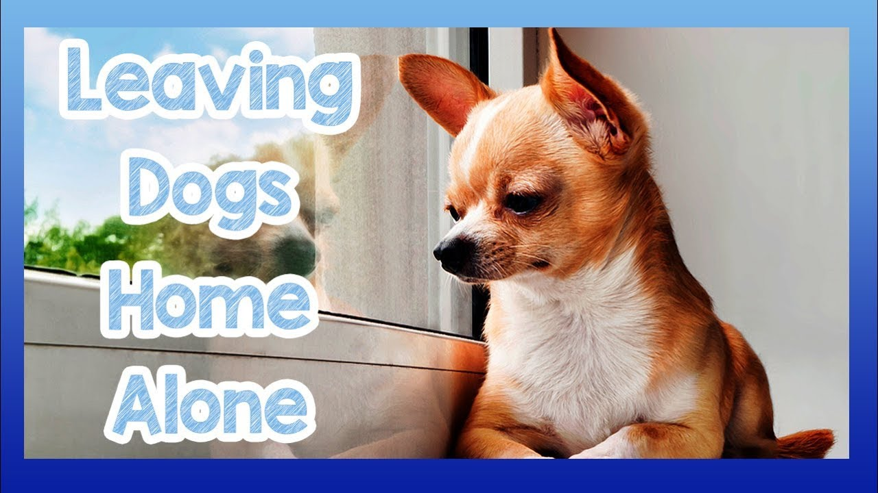 Tips On How To Keep A Dog Home Alone Training Your Be Without Problem
