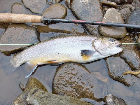 Dry Fly Trout Fishing Tips W/ 7 Hook-Ups On Video (Skipping Caddis)