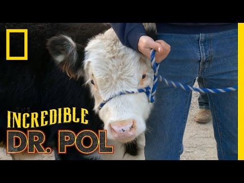 Ready for 4-H | The Incredible Dr. Pol