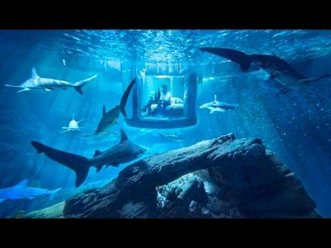 Shark Aquarium Underwater Bedroom, Paris, France