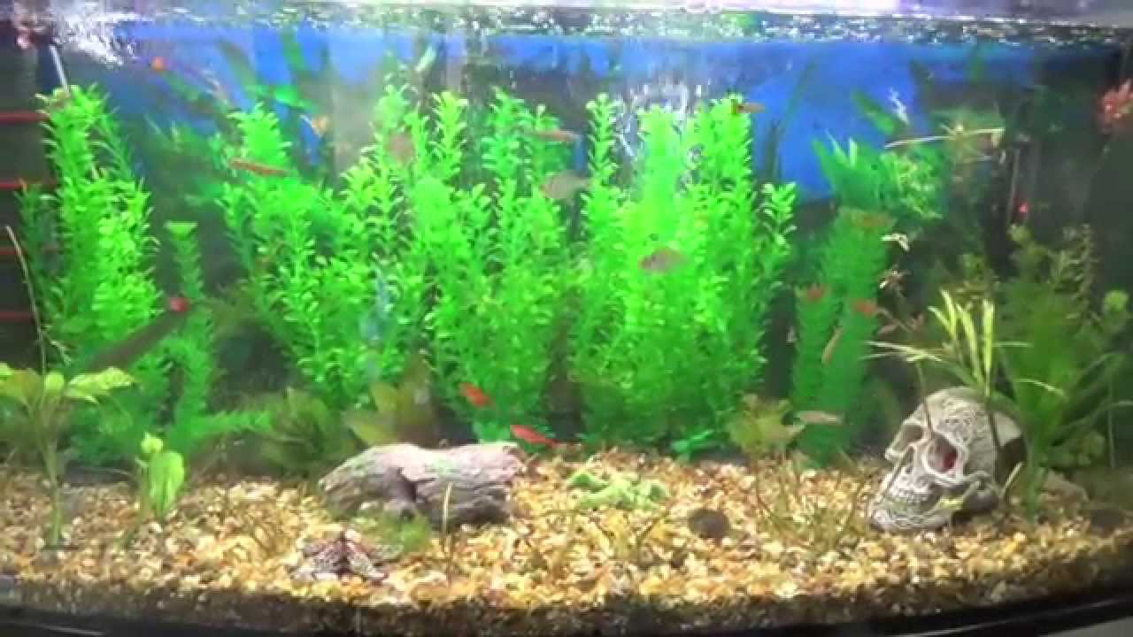 Fish Tank 3d Wallpaper Artificial Plants For Tropical Fish Tank Youtube