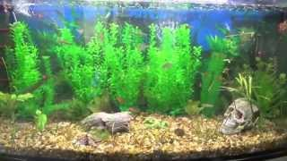 Artificial Plants For Tropical Fish Tank