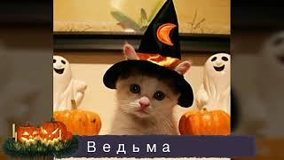 Костюмы на хеллоуин для котов и собак! Ракета Кэт