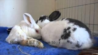 Meet our special needs bun: Sasha