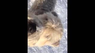 F.l.o.p.p.s. Dog Walks