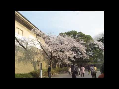 Hanami Cherry blossoms view at Osaka castle park,Osaka city,Japan 30 March 2013 slideshow