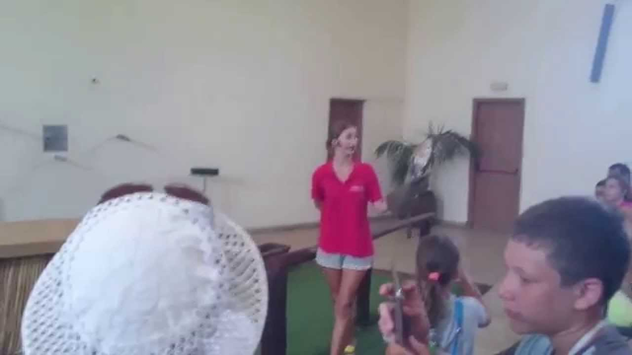 Сова Гарри Поттера - YouTube