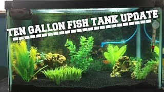 10 gallon fish tank update