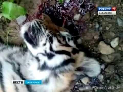 вести о убийстве животных просто