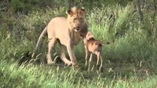 Классное видео про животных