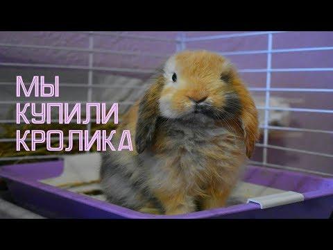 КУПИЛИ  КРОЛИКА