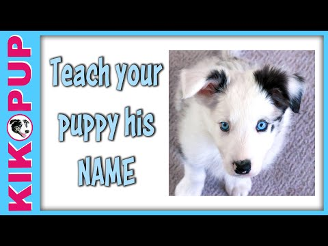Teach your puppy his name