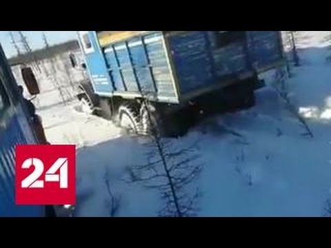 """""""Твари. Зачем?"""": Людей потрясло видео, на котором медведя раздавили грузовиками"""