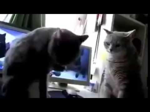 Lustige Katzen Backe Backe Kuchen Der Backer Hat Gerufen Youtube
