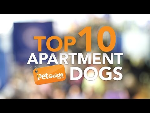 Top 10 Best Dog Breeds For Apartments