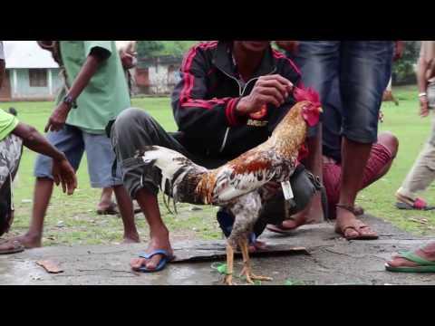 Exploring East Timor - Reissu Itä-Timoriin
