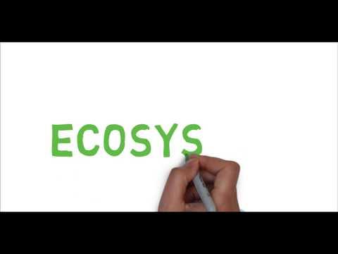 Ecosystem: The unit of Biosphere