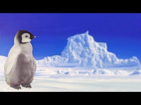 Клип с пингвинами
