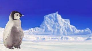 Пингвин - детская песня про пингвина - Смешной клип | Наталия Лансере