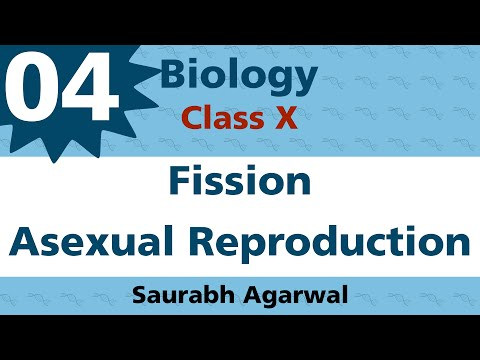 Fission Types of Asexual Reproduction