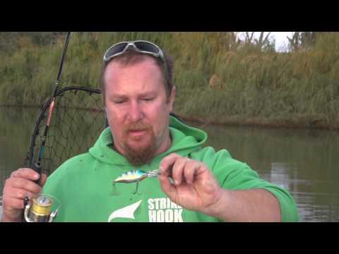 Reel Scream Fishing Chasing Murray River Callop